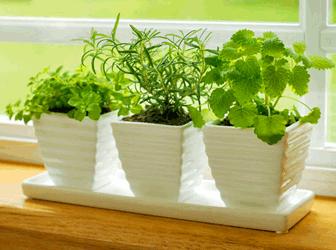 Зелень на Вашому балконі