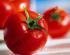 О выращивании томатов от ТМ «Добрі Сходи»™