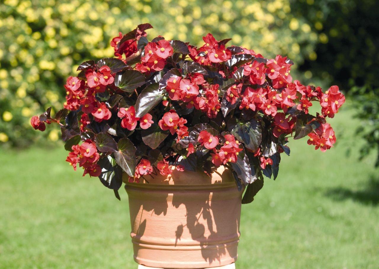 Юбилеем для, красивые цветущие комнатные растения фото и названия