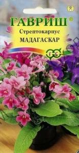 Стрептокарпус гібридний Мадагаскар, суміш 5 шт