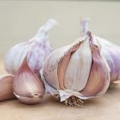 Надзвичайно врожайний сторт фіолетового часнику.