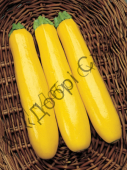 Высокоурожайный гибрид желтого кабачка-цуккини с сочной мякотью.