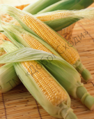 Новий ранній гібрид суперсолодкої кукурудзи.