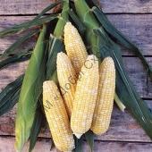 Суперсолодка кукуруза