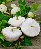 Патиссон белого цвета с отличными вкусовыми качествами.