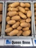 Найпопулярніший ранній сорт картоплі