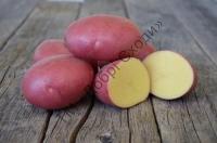 Картопля з відмінними смаковими якостями