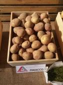 Чудовий сорт картоплі для тривалого зберігання з фіолетовими вінчиками.