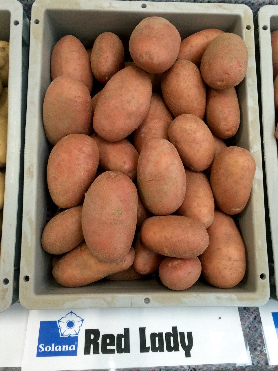 Аналог сорту картоплі Беларозза