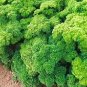 Ароматна зелень, добре переносить посуху.