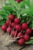 Для получения раннего и качественного урожая