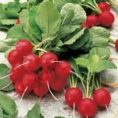 Плоды плотные, хрустящие, без горечи.