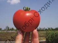 Устойчивый к холодным условиям выращивания.