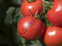 Найбільший урожай, чудовий смак та зовнішній вигляд.