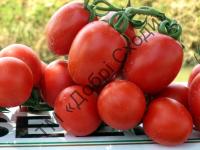 Для цільноплідного консервування, виробництва томат пасти і кетчупів.