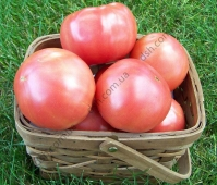 Екстра якість серед рожевих томатів.