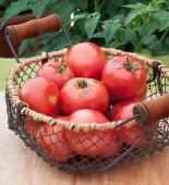 Соковитий, смачний, рожевий гібрид томату.