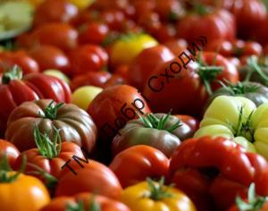 Різні сорти томатів